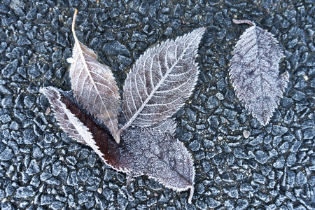 Frozen leaves on a cold winter day