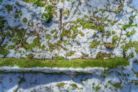 Ground covered by moss and snow early spring Reklamní fotografie
