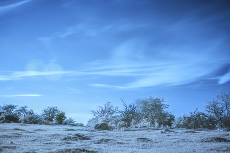 A nature scene captured in an infrared photograph