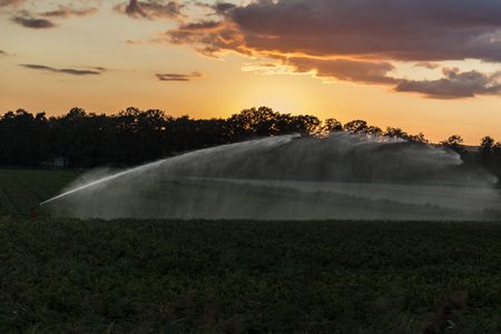 Irrigation in the filed in a summer sunset Reklamní fotografie