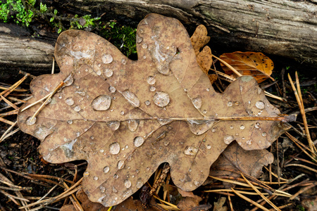 Leaf on the ground with droplets on it Reklamní fotografie
