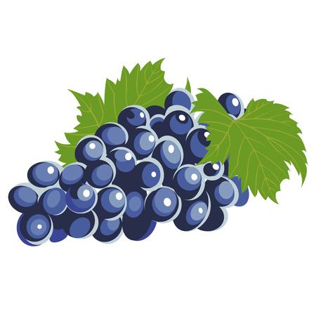 grape crop: bunch of grapes