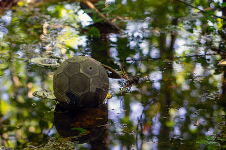 An old soccer ball with a peeling surface lies in a forest puddle in the mud