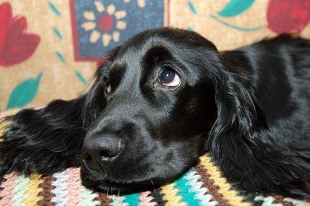 dogie: black puppy