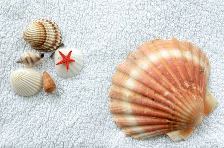 Various shells lying on white terry towel photo