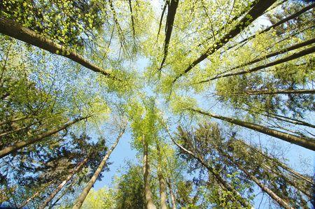 inspira?�o: Olhando para as ?rvores na floresta