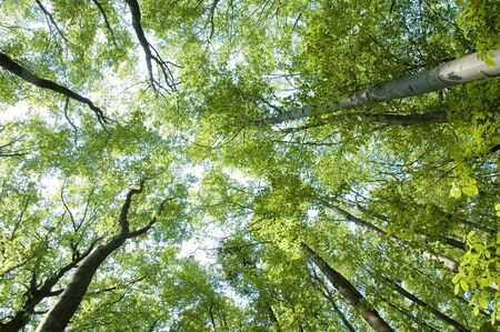 treetops: Treetops in the forest shot from the ground Stock Photo