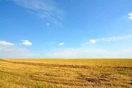 firmament: yellow meadow on a background of the dark blue sky Stock Photo