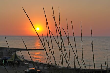 seacoast: Blades on a background of an orange-red sunset from high seacoast