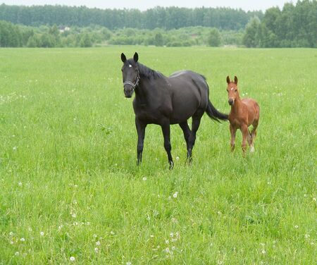 plainness: Bay mare and foal grazing in a bright green pasture