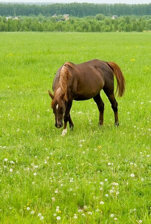 plainness: brown horse with green grass at background