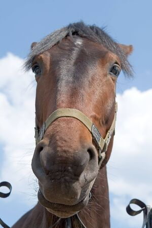 Big muzzle. The horse looks in an objective with blue sky at background. Stock Photo