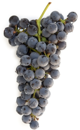 Washed blue grape cluster on white