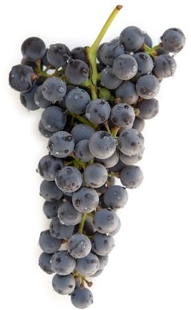 umyty: Washed niebieski winogron klastra na białym