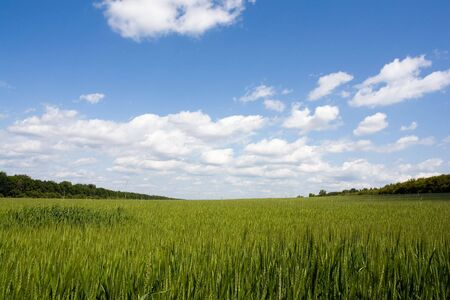 Rye against the cloudy sky. Good for background. Stock Photo - 3149649