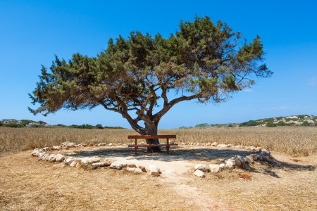 wooden bench standing among the green bushes under the alone tree against the sky photo