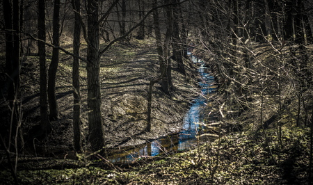 hardwoods: Photo of little creek in a dark forest