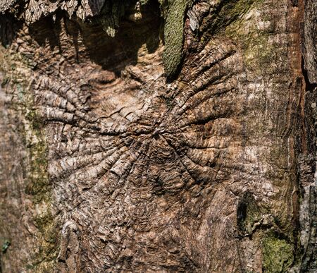 bark carving: Weathered wood textured background with green moss Stock Photo