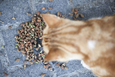 cat eating: Abandoned street cat eating cat food. Focus is on food. Stock Photo