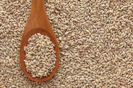 pearl barley: Pearl barley in a wooden spoon on pearl barley background. Close-up. Stock Photo