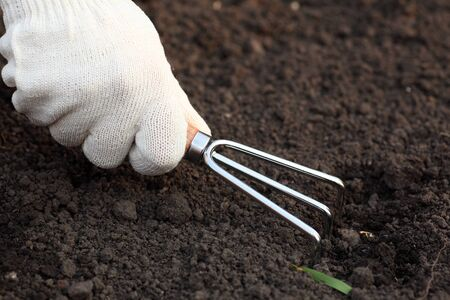 cultivator: Weeding. Treatment of the ground with a handled garden cultivator. Close-up.