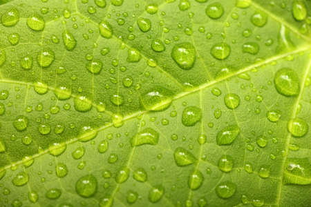 leafage: Green leaf with waterdrops after rain. Shallow depth of field. Close-up.