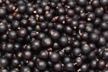 currants: Black currants close-up.