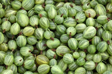 gooseberries: Gooseberries close-up. Stock Photo