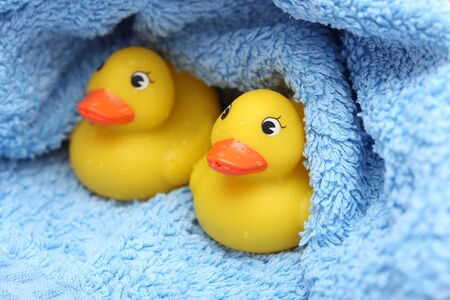 after bath: Rubber Ducks after bath wrapped in a blue towel. Close-up.