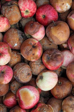 unpleasant smell: Rotten Apples. Close-up.