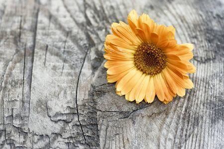 daisywheel: Calendula on wooden background
