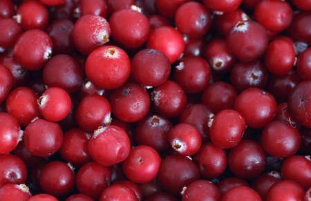 arandanos rojos: Arándanos fondo.
