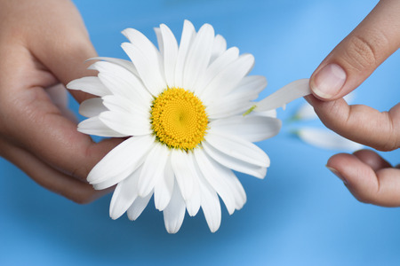 白いデイジーの花びらをティアオフを持つ少女 写真素材