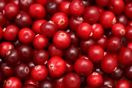 arandanos rojos: Cranberries close-up.