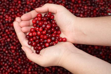 Cranberry in palms. Close-up. Standard-Bild