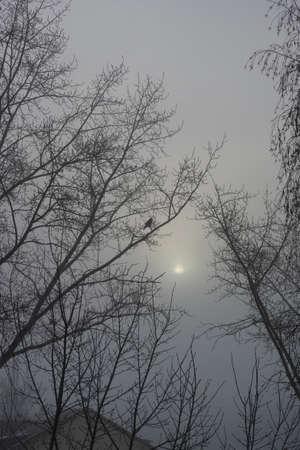 fog foggy: Trees in the fog. Foggy day. Winter. Stock Photo