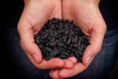 semillas de girasol: La mujer sostiene las semillas de girasol frescas en sus palmas. De cerca.
