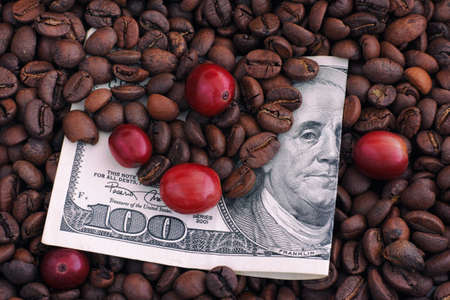 coffee harvest: Roasted and raw red coffee beans on one hundred dollar bill. Price of coffee concept. Close up.