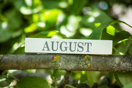 The month August printed on a wooden block lying on a tree branch. Close up.