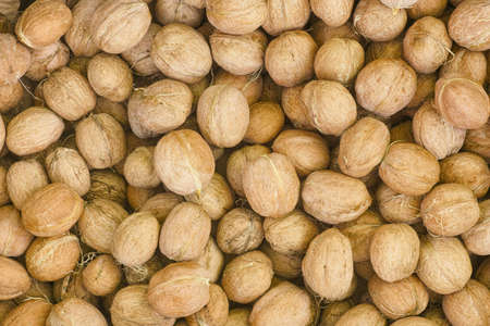 Freshly harvested walnuts. Close up.