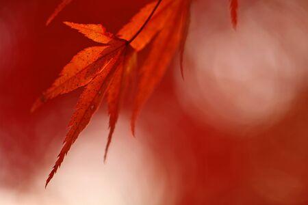 Autumn leaves Stock Photo - 14715541