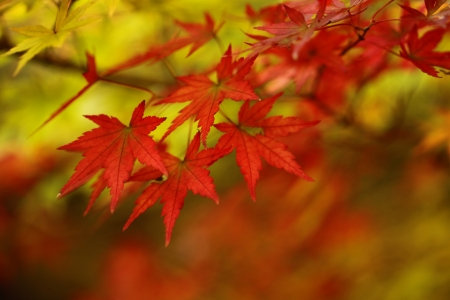 Autumn leaves Stock Photo - 14715542