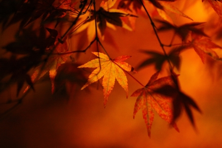 Autumn leaves Stock Photo - 14715544