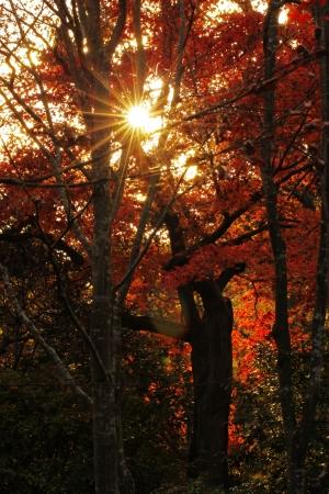 Autumn leaves  in Syouwakinenn Garden Japan Stock Photo - 14906564