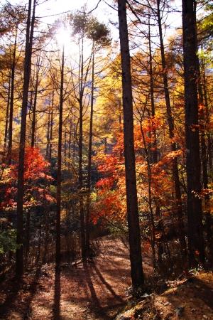 Autumn leaves  in Nishizawa Ravine Japan Stock Photo - 14906565