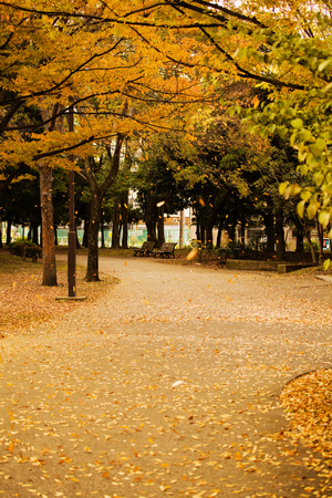 autumn fall Stock Photo - 26810708