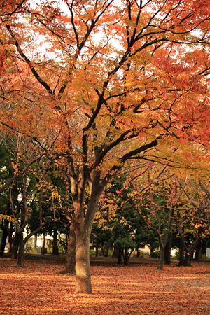 autumn fall Stock Photo - 26810840