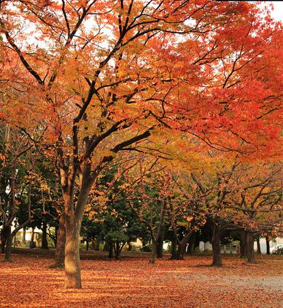 autumn fall Stock Photo - 26810841