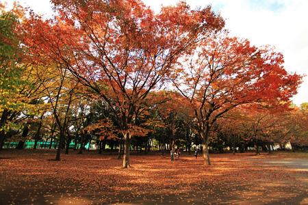 autumn fall Stock Photo - 26810843