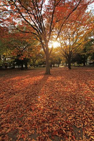 autumn fall Stock Photo - 26810844